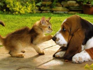 обои Пёсик и котик фото