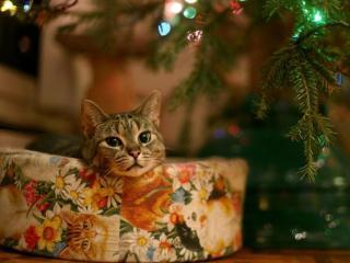 обои Подарок новогодний фото