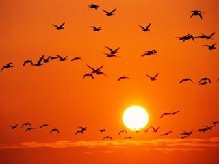 обои Птицы и небо фото