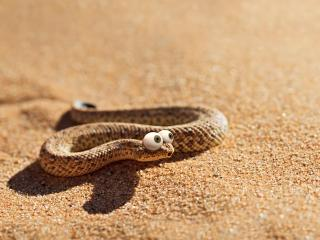 обои Змейка с глазами на выкате фото