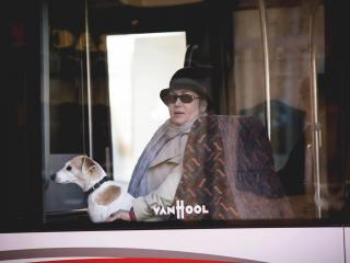 обои Дама в автобусе с собачкой фото