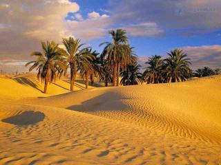 обои Пустыня Сахара. Тунис фото