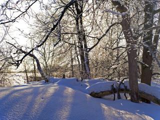 обои Пушистый снег и деревья фото