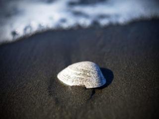 обои Ракушка на чёрном песке фото