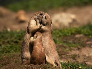 обои Семейный поцелуй фото