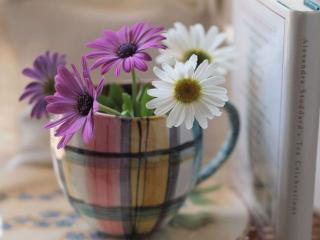 обои Цветочки в кружке фото