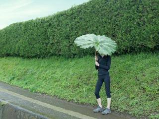 обои Девушка под зонтиком-листом фото