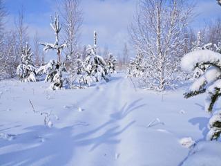 обои Снег пушистый фото