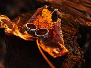 обои Два кольца на желтом осеннем листе фото