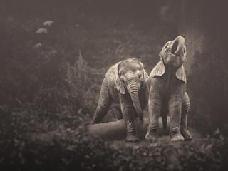 обои Двое слонят играют в лесу фото