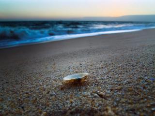 обои Ракушка и крупный песок фото