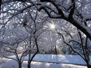 обои Солнце светит сквозь заснеженные ветви фото