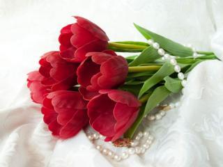 обои Тюльпаны с жемчугом фото