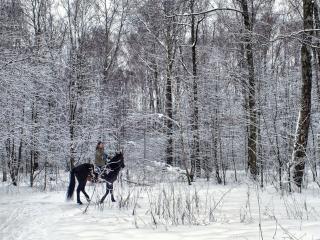 обои для рабочего стола: Верхом на лошади в зимнем лесу