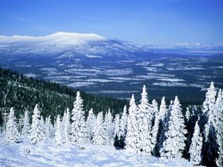 обои для рабочего стола: Горы в елях и снегу