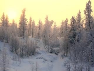 обои Жёлтое солнце зимы фото