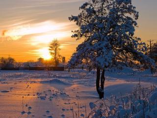 обои Тишина зимнего вечера фото