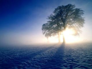 обои для рабочего стола: Утро зимнее,   туманное