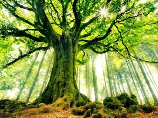 обои Дерево жизни фото