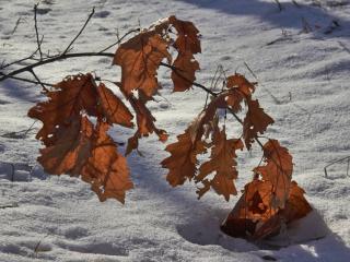 обои для рабочего стола: Зима и осень