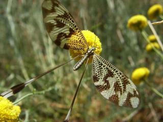 обои Бабочка с длинными крыльями фото
