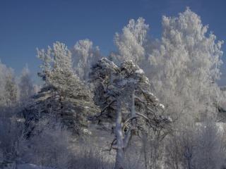 обои для рабочего стола: Ленинградская зима