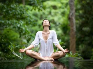 обои Медитация в лесу фото