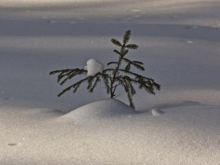 обои Первая зима фото