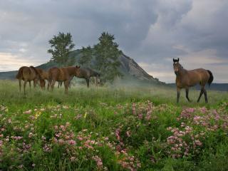 обои Лошади и туман фото
