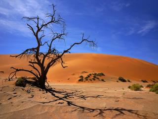 обои Мёртвое дерево пустыни фото