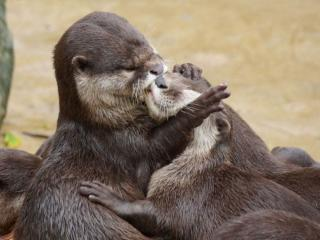 обои Нежный поцелуй фото