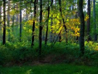 обои Кусты и деревья в лесу фото