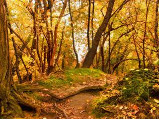 обои Лесная осень фото