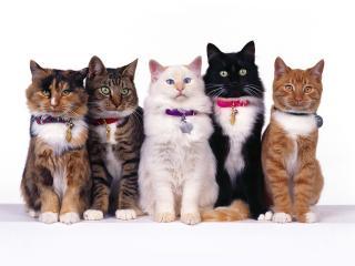 обои для рабочего стола: Пять котов