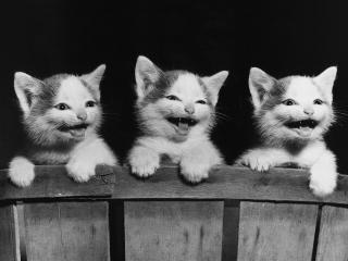 обои Трое котят фото