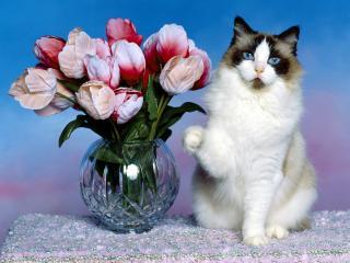обои Тюльпаны и кот фото