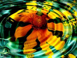 обои Цветок под водой фото