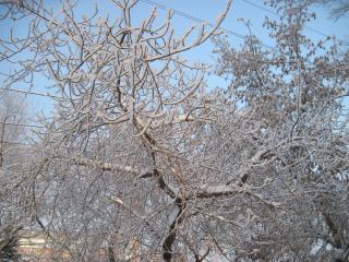 обои Зима в городе фото