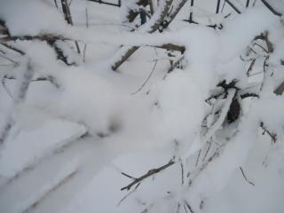 обои Трава под снегом фото