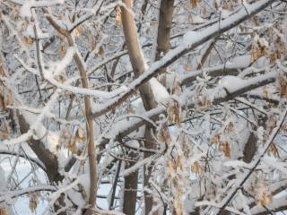 обои Снежная зима фото