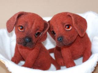 обои Два рыжих щенка фото