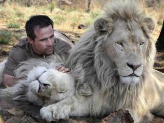 обои Дружба человека со львами фото