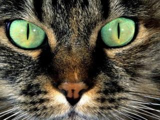 обои для рабочего стола: Зелёные глаза