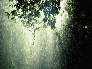 обои для рабочего стола: Тёплый дождь в лесу