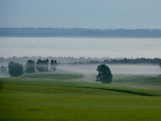обои Ёжики в тумане фото