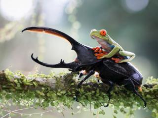обои для рабочего стола: Жук и лягушка