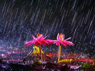 обои Ночной дождь фото