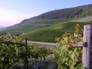 обои Крымские виноградники фото