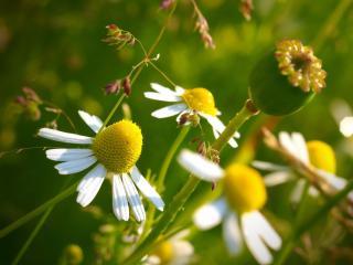 обои Весна цветы фото