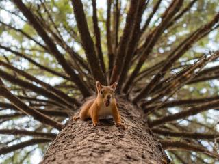 обои Белочка на дереве с орехом фото